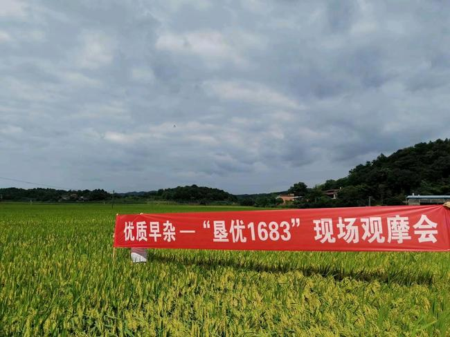 垦优1683零陵观摩会2020 (1).jpg